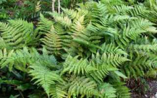 Ельники зеленомошники