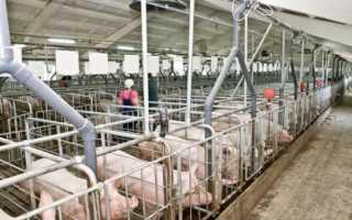 Бизнес план свинокомплекса 3000 голов