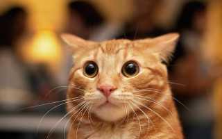 Петиция против налога на животных