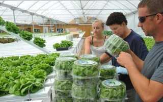 Что выгодно выращивать в теплицах на продажу