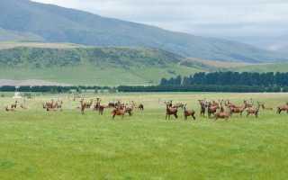 Условия разведения оленеводства