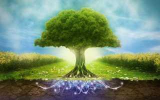 Природная среда кратко