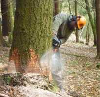 Незаконная вырубка деревьев куда обращаться