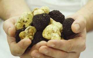 Самые дорогие грибы в мире список
